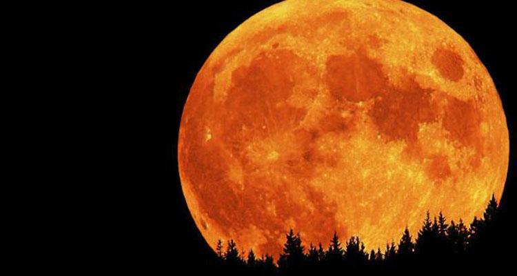 Eclipse lunar tras árboles