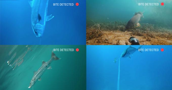 Detección de mordida de la cámara Spydro