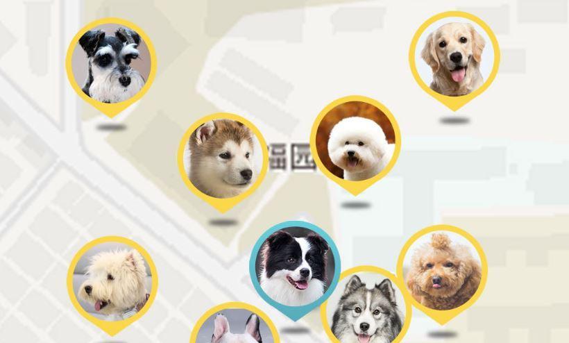 Seguir mascotas con Xiaomi Peer Dog Locator