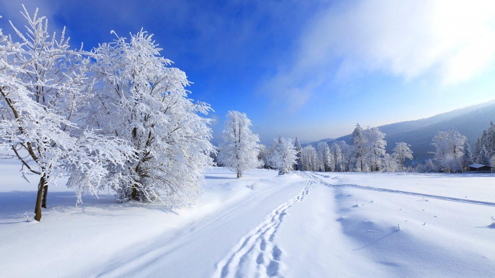 Fondo de pantalla de invierno