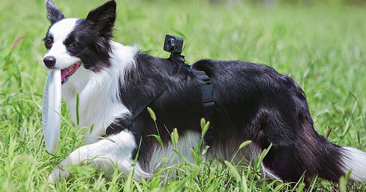 uso de Cámaras deportivas 4K en un perro
